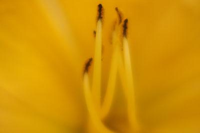 Stamens @ Hampton Court Flower Show